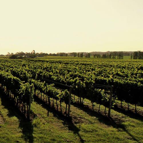 Toscanini Wines